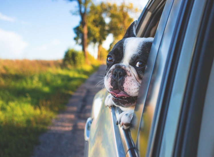 How to Rent a Car With a Pet